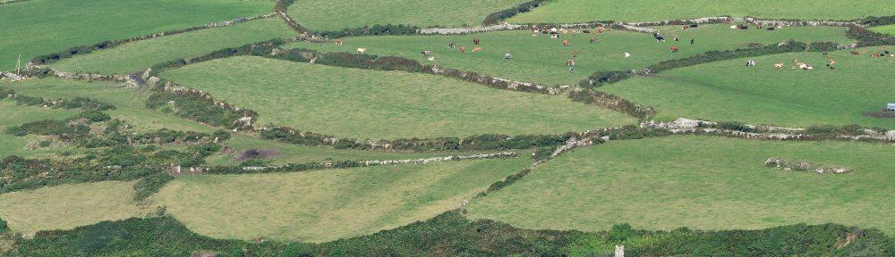 Fields near Zennor: